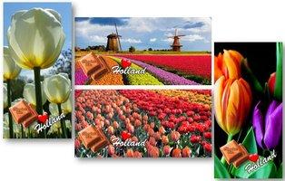 CHOCOLADE TABLET MELK Tulpen [GLOSSY BIO]
